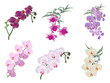 six color orchids inflorescences on white