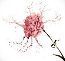 Carnation With Splashes