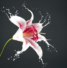 Pink Flower With Splashes