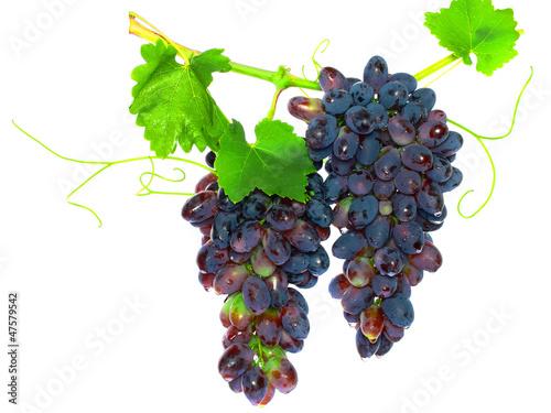 Fotografie, Obraz  Black grape on cane vine with leafe. Isolated