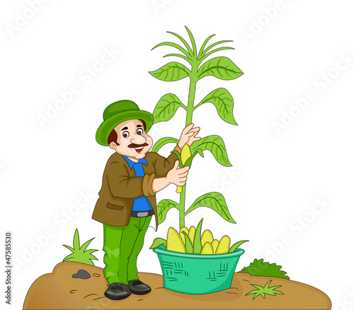 Poster Ranch Man Harvesting Corn, illustration