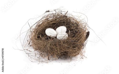 Photo Nido con uova di uccello