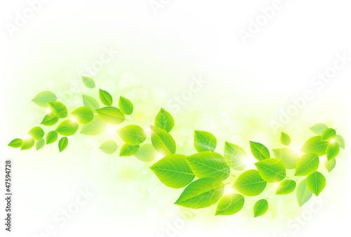 Láminas  新緑イメージ