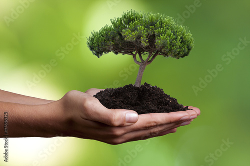 Photo Stands Roe mano con árbol joven