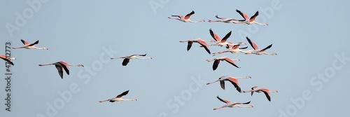 Valokuvatapetti Fenicotteri rosa in gruppo