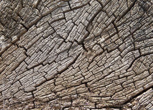 Fototapeta premium Tekstura Kikuta Driftwood