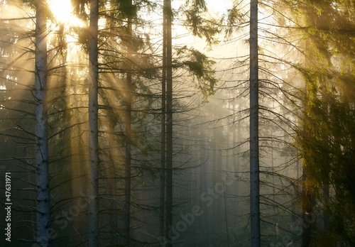 Tuinposter Bos in mist Forest with fog and sunlight