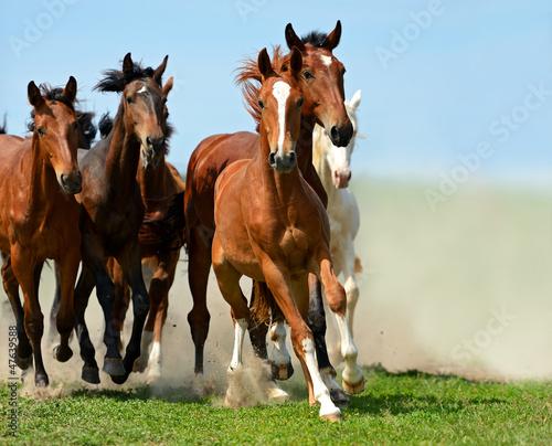 Horse Fototapeta