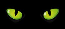 Eyes Of Cat On Black Background