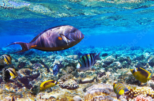 Fototapety, obrazy: Coral and fish in the Red Sea. Egypt, Africa.