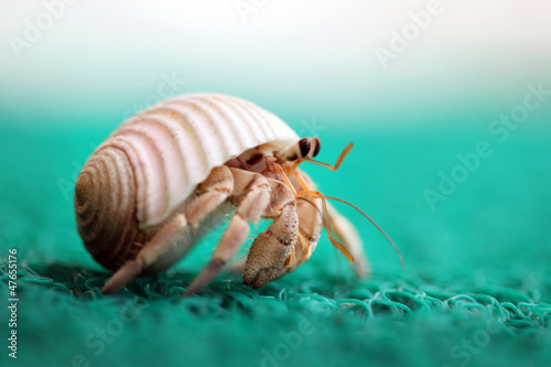 Cute tiny hermit crab running away Canvas Print