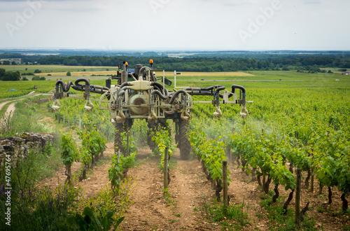 Fotomural traitement chimique dans les vignes