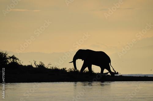 Papiers peints Corail Elephant back light on the Kazinga channel
