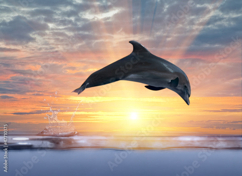 Staande foto Dolfijnen dolphin jumping above sunset sea