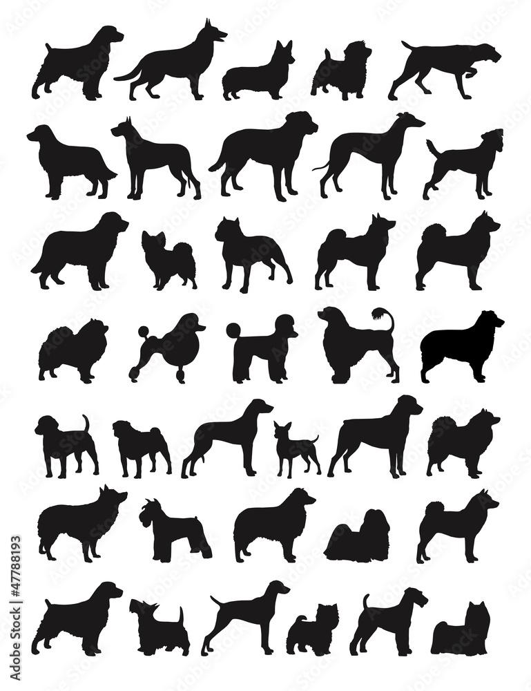 Fotografie, Obraz  Popular dog breeds illustration