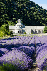 FototapetaSenanque abbey with lavender field, Provence, France