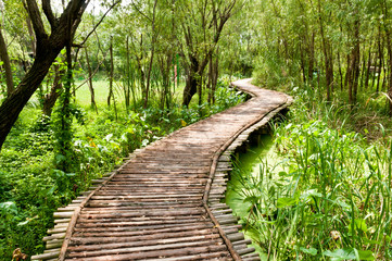 FototapetaThe wood bridge in the woods