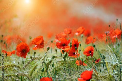 Foto-Duschvorhang - Poppies