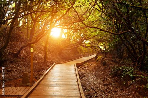 Ścieżka Zmysłów, Park Narodowy Anaga, Teneryfa