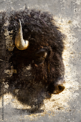 Nowoczesny obraz na płótnie American bison (Bison bison) Artistic portrait with textured bac