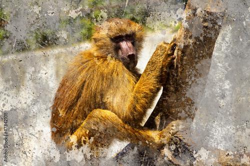 artystyczny-portret-z-teksturowanym-tlem-pawian