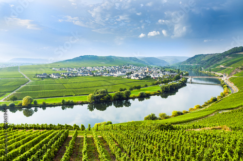 Poster Vineyard famous Moselle Sinuosity with vineyards