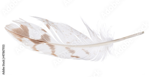 light feather with brown spots isolated on white