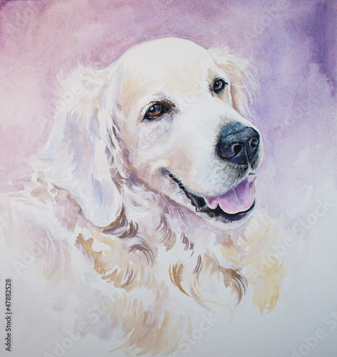 golden-retriever-akwarele