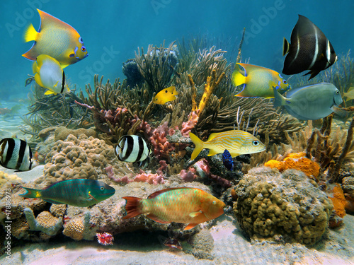 Foto op Canvas Onder water Colorful tropical fish underwater in a coral reef with sea sponges, Caribbean