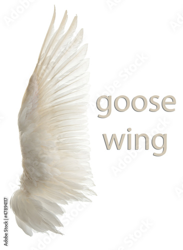Poster Cygne Natural white goose wings. Isolation.
