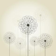 Fototapeta Flower a dandelion