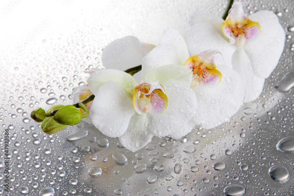 Fototapety, obrazy: white beautiful orchids with drops