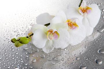 Fototapeta biały piękne storczyki z kroplą