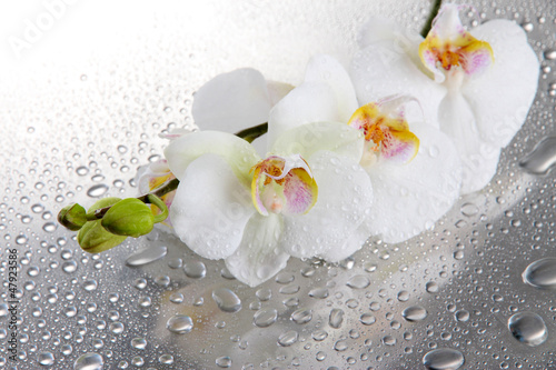 Foto op Plexiglas Orchidee white beautiful orchids with drops
