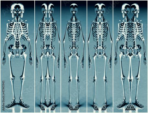 Photo  Five Silver Blue Alien Skeleton 01