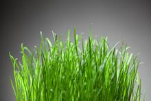 Fresh Grass On Grey Background