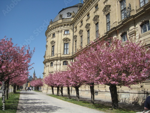 Leinwand Poster japanische blütenkirsche in Residenz Würzburg