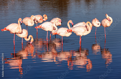 Poster de jardin Flamingo flamants roses