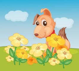 Biljka pasa i cvijeća