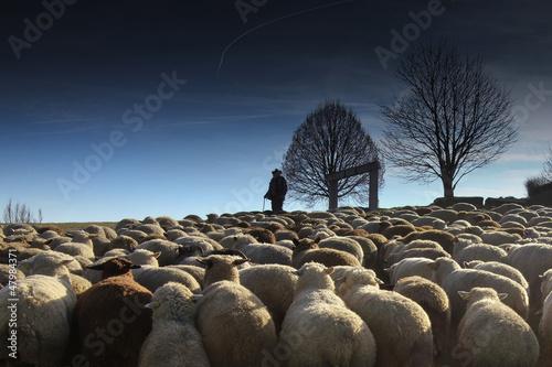Fototapeta Der mit den Schafen spricht
