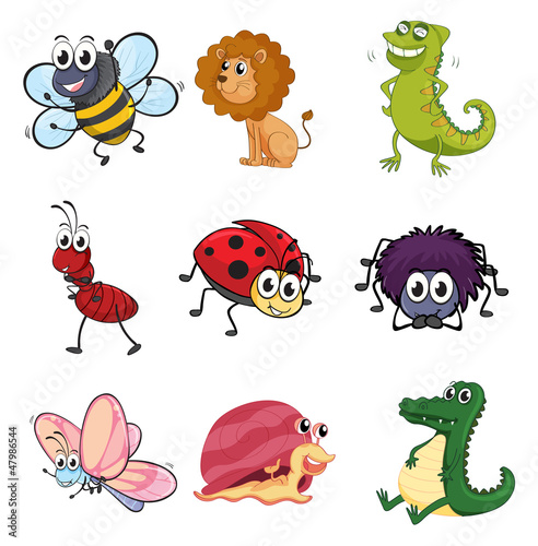 Various animals and insects
