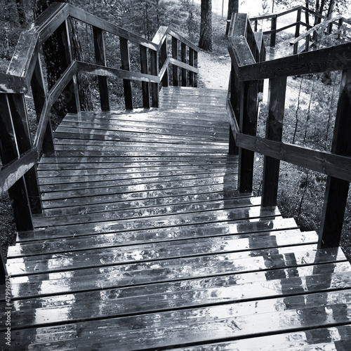Wet wooden stairway in the forest