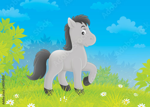 Poster Pony Foal on a meadow