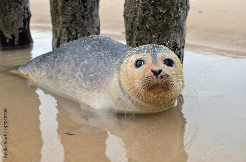 bébé phoque dans le bain – kaufen Sie dieses Foto und finden ...
