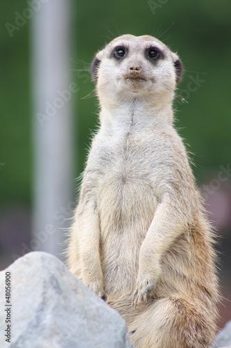Photo Stands Kangaroo Neuwied-21