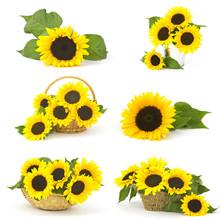 Beautiful Sunflowers (Helianthus) - Collage