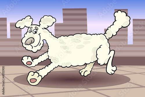 Poster Dogs running poodle dog cartoon illustration