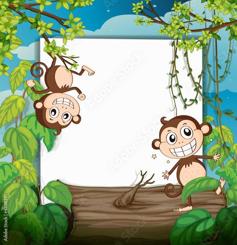 Foto op Aluminium Zoo Monkeys and white board