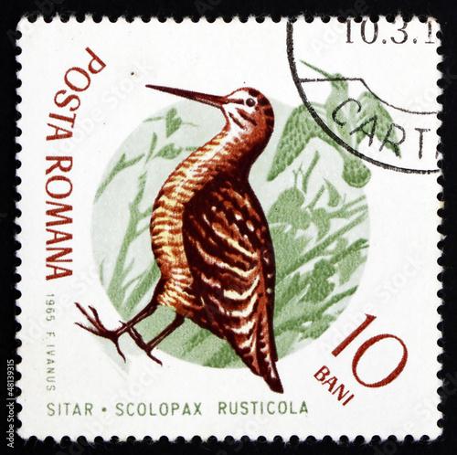 Fotografia, Obraz  Postage stamp Romania 1965 Eurasian Woodcock, Bird
