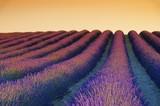 Lavendelfeld Sonnenuntergang 02